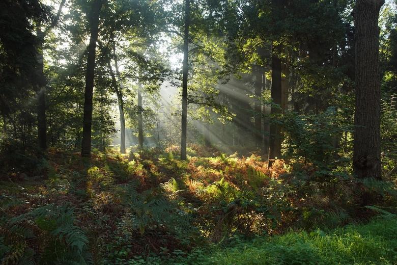 Lichtharp in de bossen van landgoed Velder (foto Bert Vervoort)