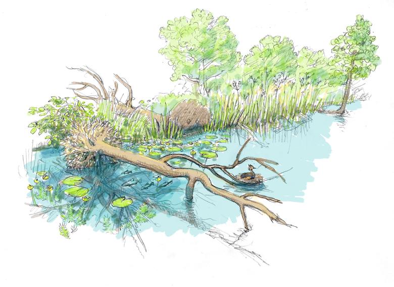 Tussen de takken van de dode bomen nestelen zich straks watervogels. Tekening: Jeroen Helmer