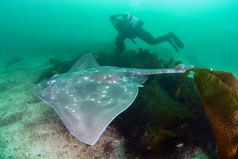 De reusachtige vleet kan meer dan tweeëneenhalve meter lang worden. Foto: WWF, Peter Verhoog