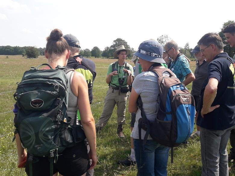 Vlinderexcursie Maashorst