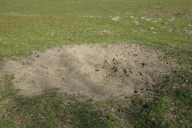 Eén van de stierenkuilen of zandbaden die door de wisenten is gemaakt. Foto: Kerstin Bouma