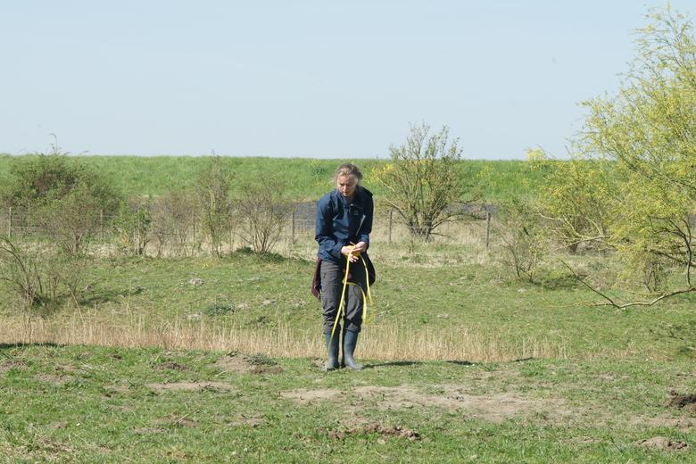 In de weer met een meetlint om de grootte van een stierenkuil op te meten. Foto: Ewout Melman