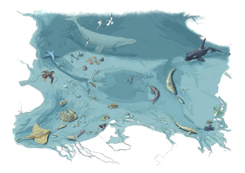 Op weg naar een rijke en levende Noordzee