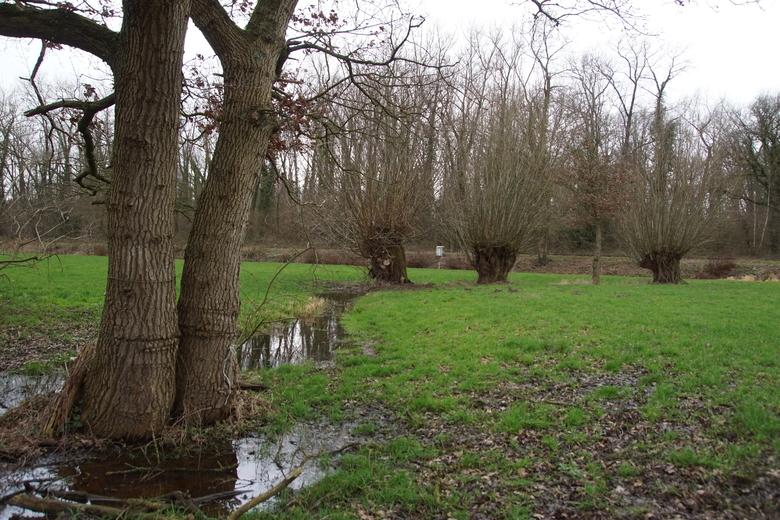 Beeld van het projectgebied rond Kasteren (Foto: Bert Vervoort)