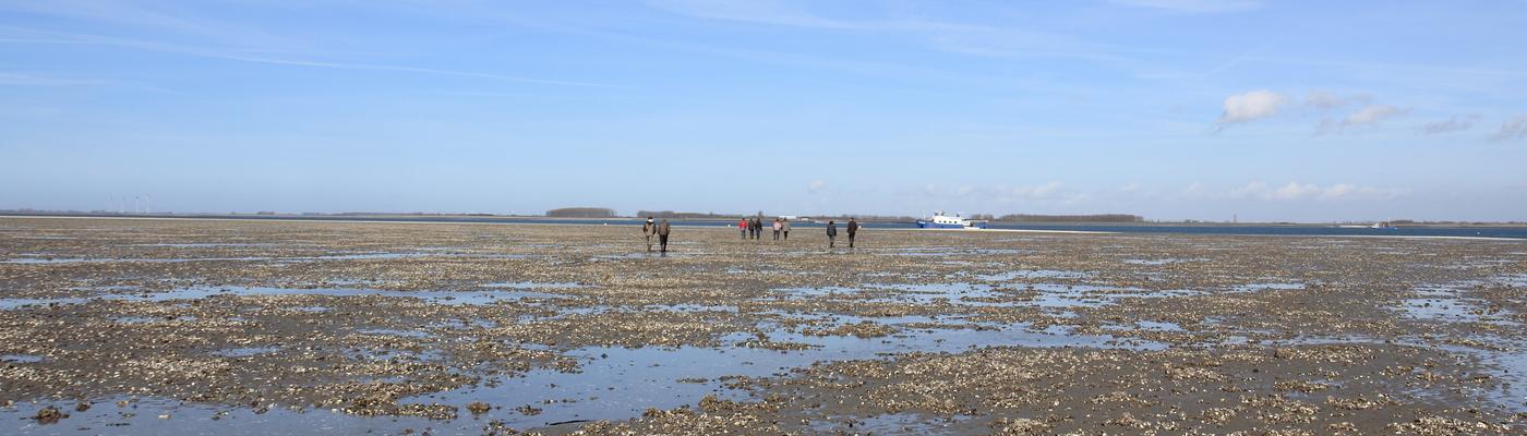 Mensen wandelen over oesterbank
