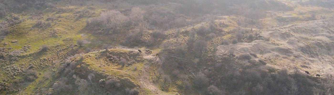 Wisenten vanuit de lucht. Foto: Harm Botman