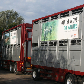 Transport grazers naar Letland