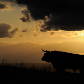 Rund Spanje Staffan Widstrand / Rewilding Europe